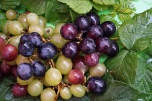 ¡A la rica uva!