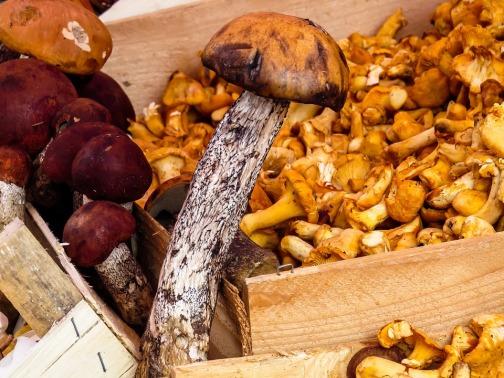 mushrooms-1603666_960_720