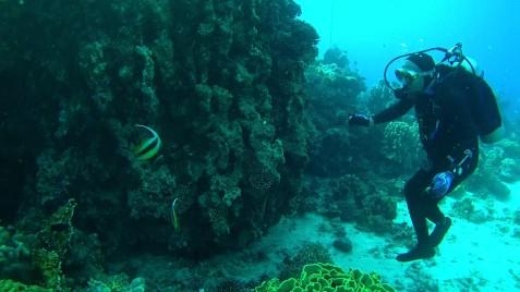Submarinismo en el Golfo de Aqaba